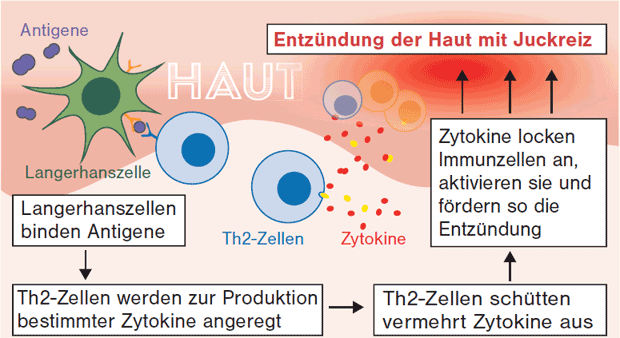 immunreaktion